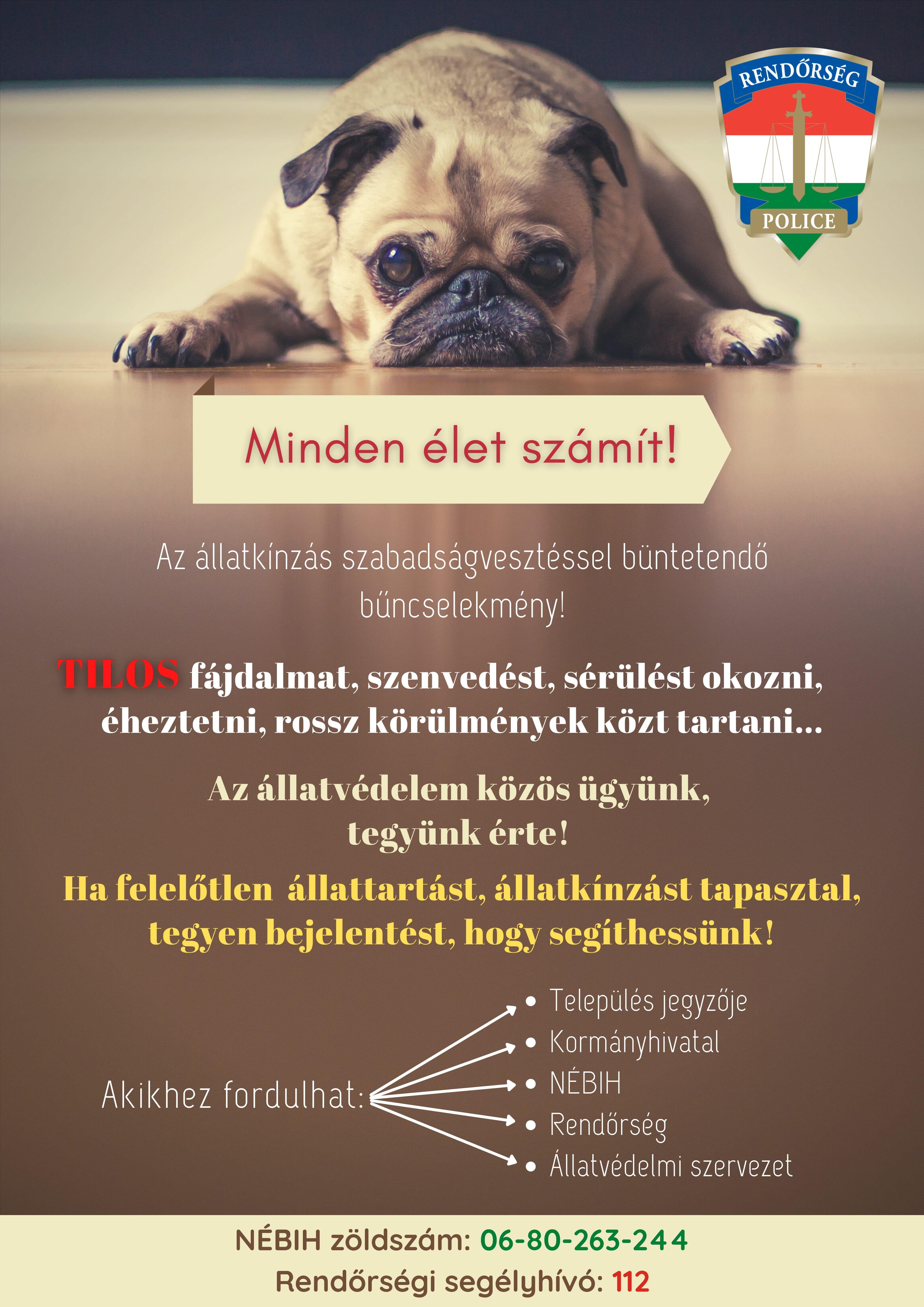 Felelős állattartás, állatvédelem